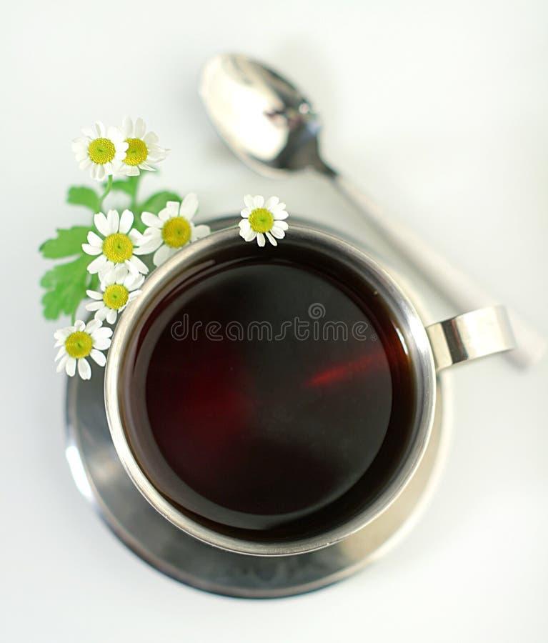 春黄菊杯子金属茶 免版税库存照片
