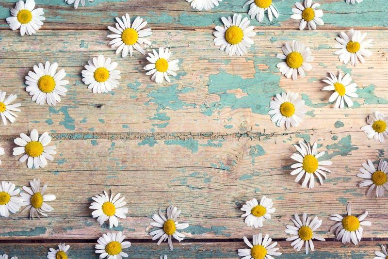 春黄菊框架与拷贝空间的在老木背景 免版税图库摄影