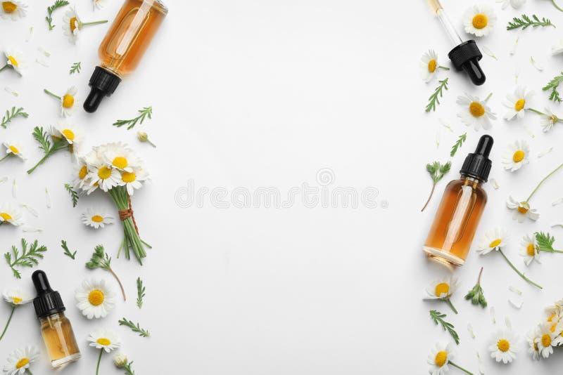 春黄菊花和化妆瓶在白色背景,顶视图的精油 库存照片