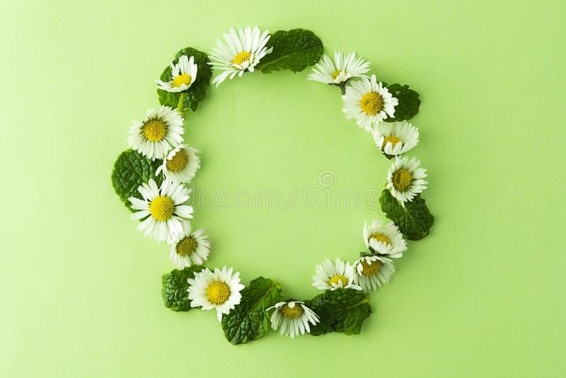 春黄菊花和薄荷的草本盘旋在绿色的框架,茶或设计的 与拷贝空间的夏天绿色背景 图库摄影