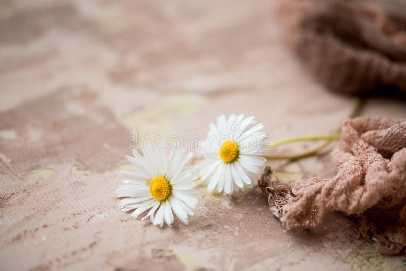 春黄菊花束在黑具体背景的 开花新鲜 野花美丽的花束 复制空间 文本的空间 免版税库存照片