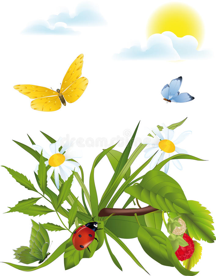 春黄菊草甸 向量例证