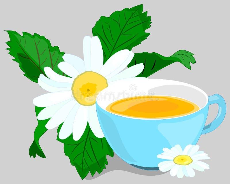 春黄菊 甘菊茶 从春黄菊花的有用的医药饮料  免版税库存照片