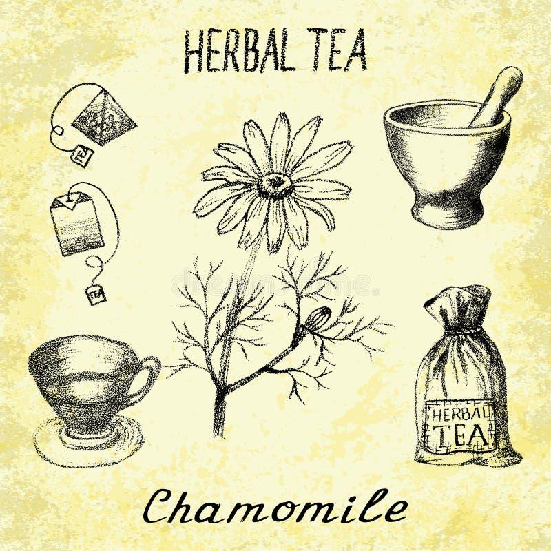 春黄菊清凉茶 套在依据手铅笔图的元素 库存例证