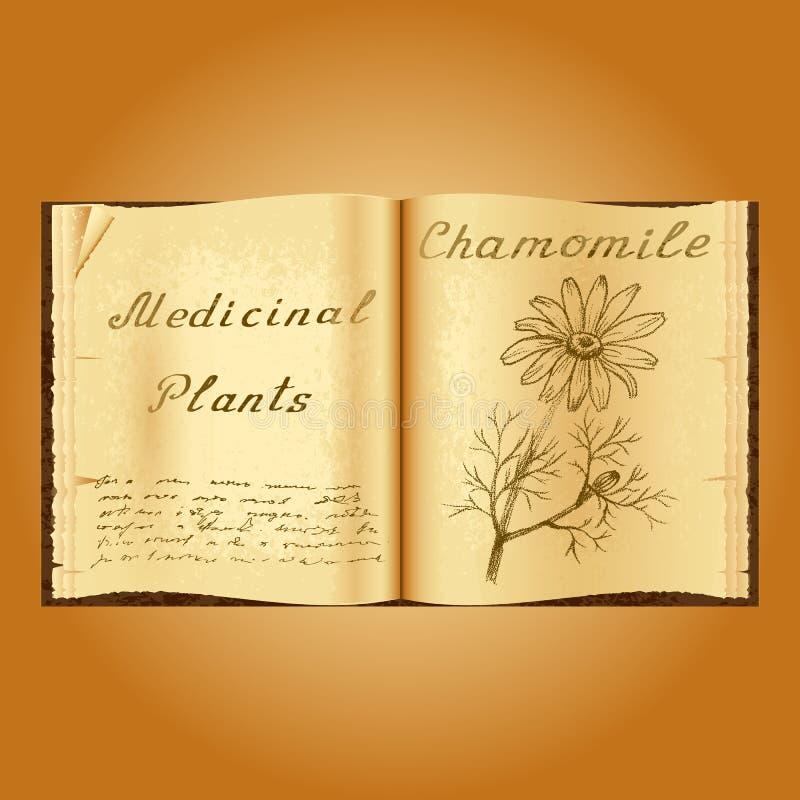 春黄菊 植物的例证 医疗工厂 书中医师老开放书 库存例证