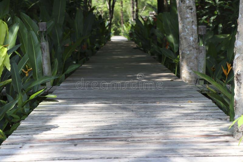 是一个木地板的道路今后是长的路 库存照片