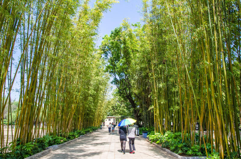 是一个风景区在绿色湖公园崔虎队公园的竹树丛海岛 库存图片