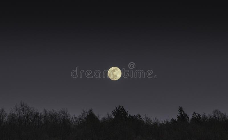 是在黑暗的森林的满月 库存照片