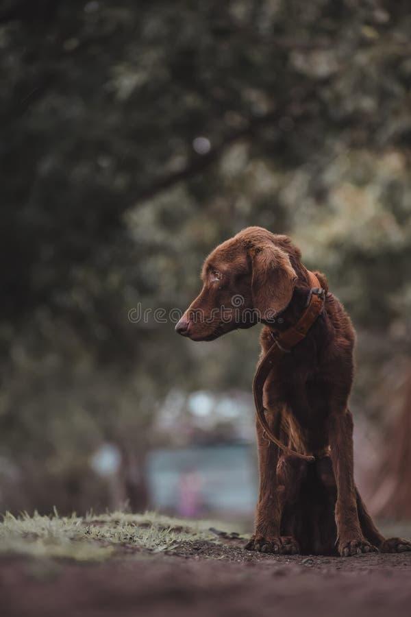 是很哀伤和他设置那里哭泣的我的狗 免版税库存图片