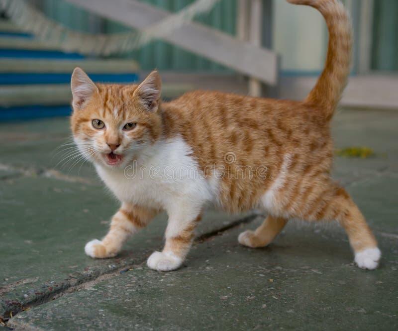 是无家可归的小猫的嘘声户外 库存图片