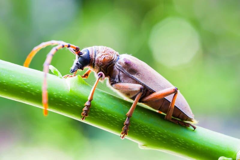 是棕色的昆虫种类 图库摄影