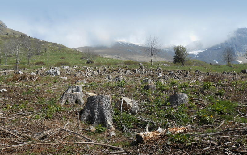 是的山毛榉保加利亚剪切了破坏下来森林日志山pirin 库存照片