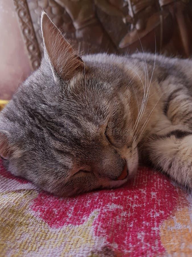 是的猫放松 免版税库存图片