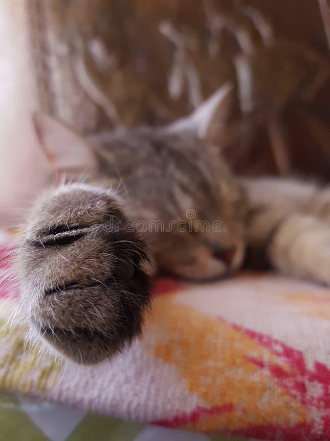 是的猫放松 库存照片