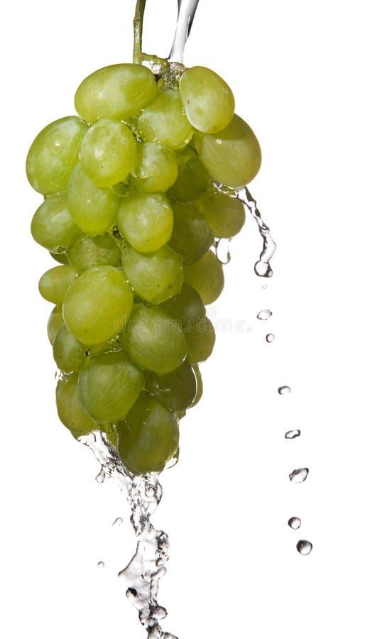 是被洗涤的葡萄 库存照片