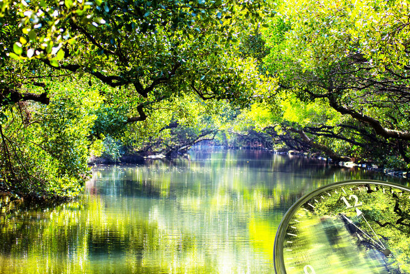是绿色世界的时间 库存图片