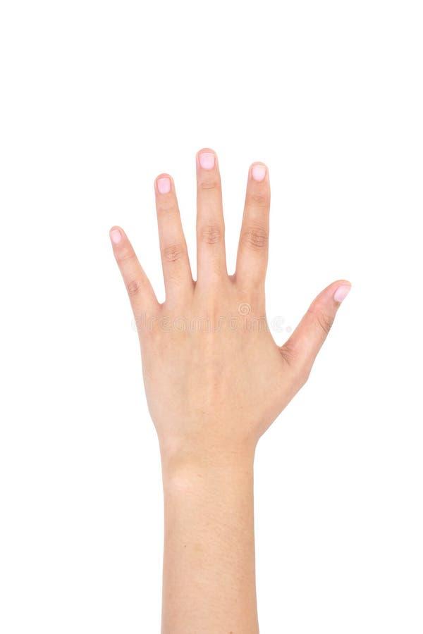 显示五个手指的妇女左手 库存图片