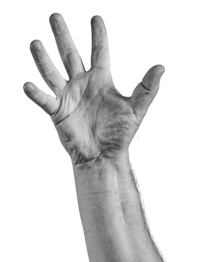 显示五个手指的妇女手隔绝在白色背景 库存照片