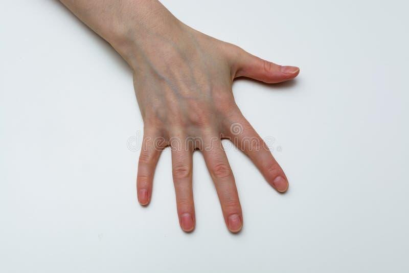 显示五个手指的妇女手隔绝在白色背景 免版税库存图片