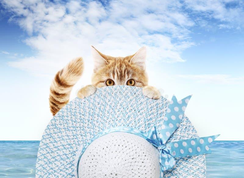 显示夏天帽子的滑稽的宠物猫在海和天空蔚蓝背景,动物假日概念 免版税图库摄影