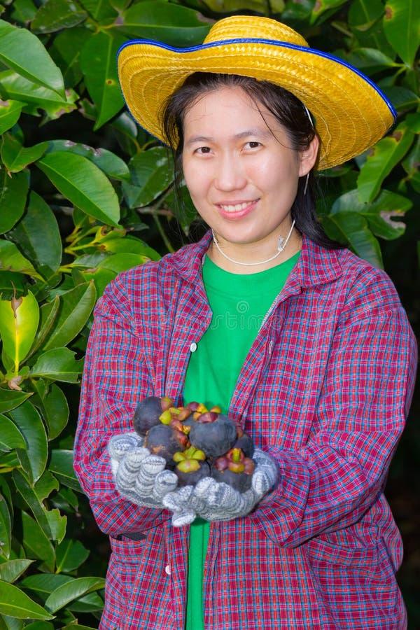 显示山竹果树的女性农业学家手 图库摄影
