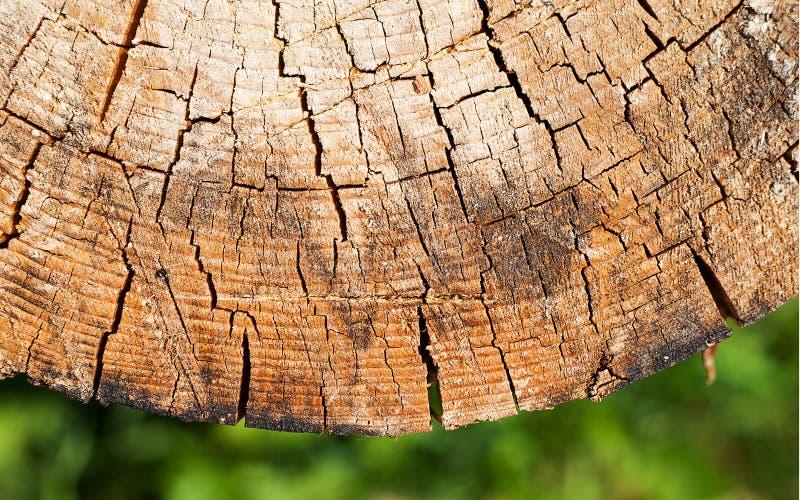 显示年轮的树干的横断面 切片木头的树干与年轮的 库存照片