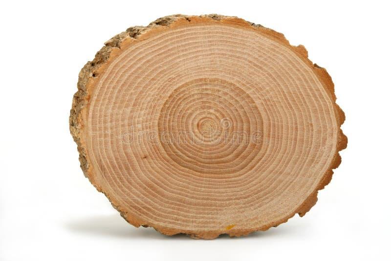 显示树干的交叉年轮部分 免版税库存照片