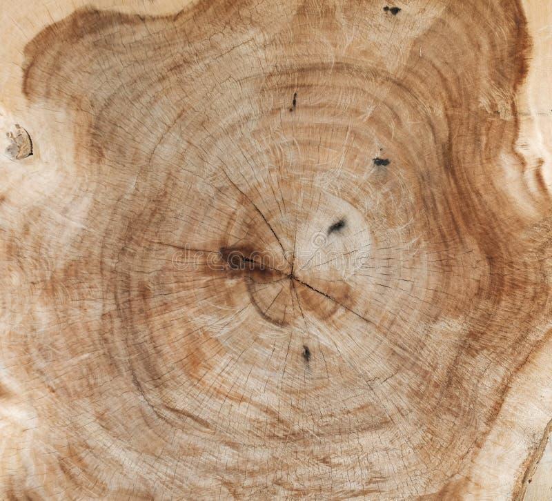 显示树干的交叉年轮部分 库存照片