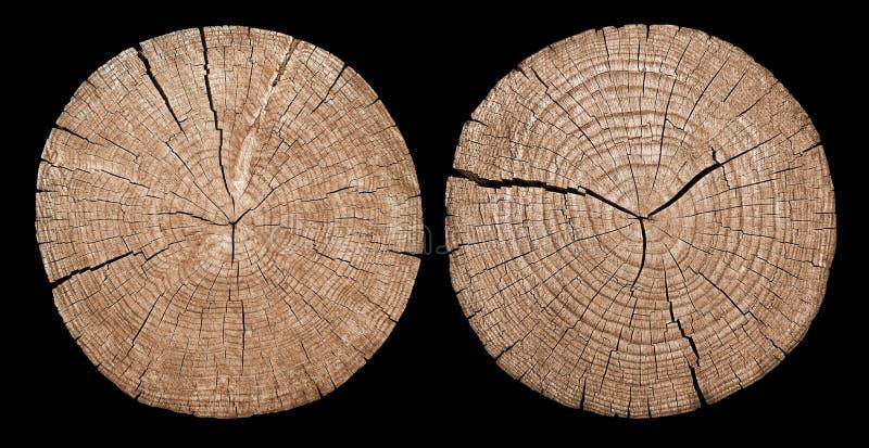 显示树干的交叉年轮部分 库存图片