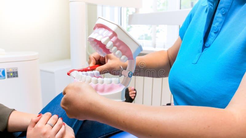 显示hpw的牙医的特写镜头图象clen在塑料下颌的牙塑造 免版税库存图片