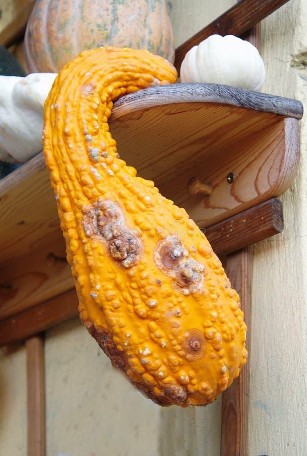 显著地垂悬从木架子的形状的橙色南瓜 库存照片