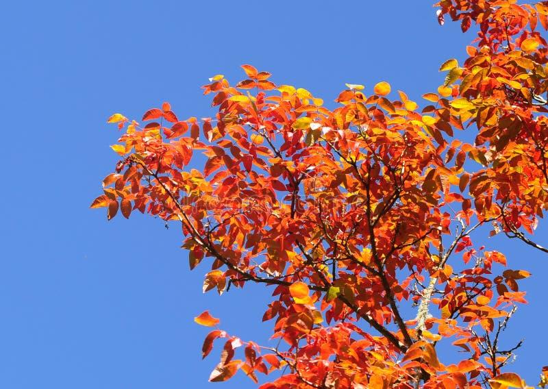 显露美好的秋季颜色的叶子 图库摄影