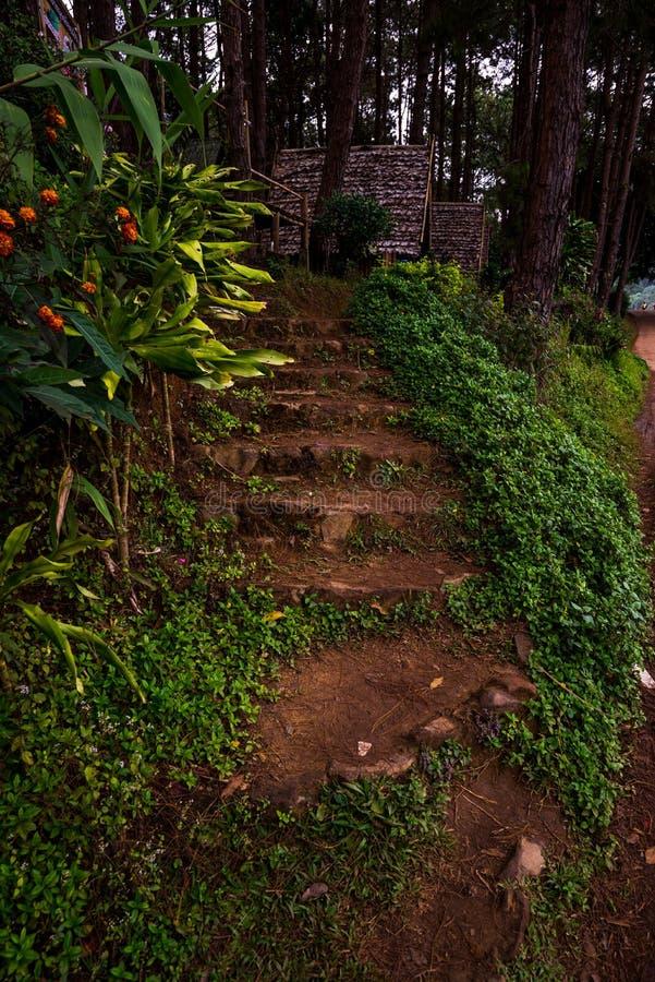 晃动楼梯在步行的森林里对与某一植物的小屋的双方 库存图片