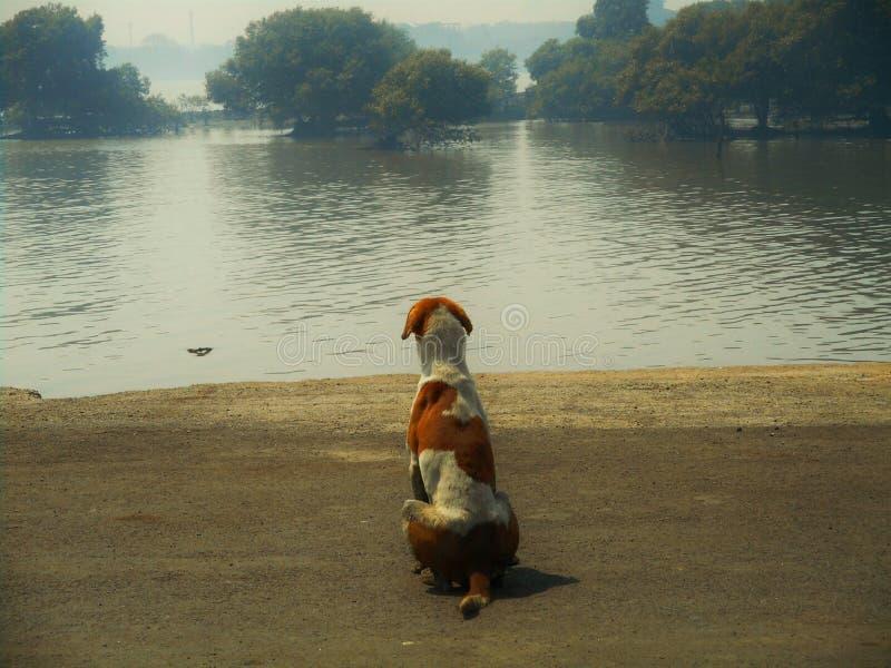 晒日光浴在Sewri船坞的狗 免版税图库摄影