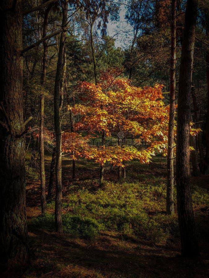 晒日光浴的树 库存照片