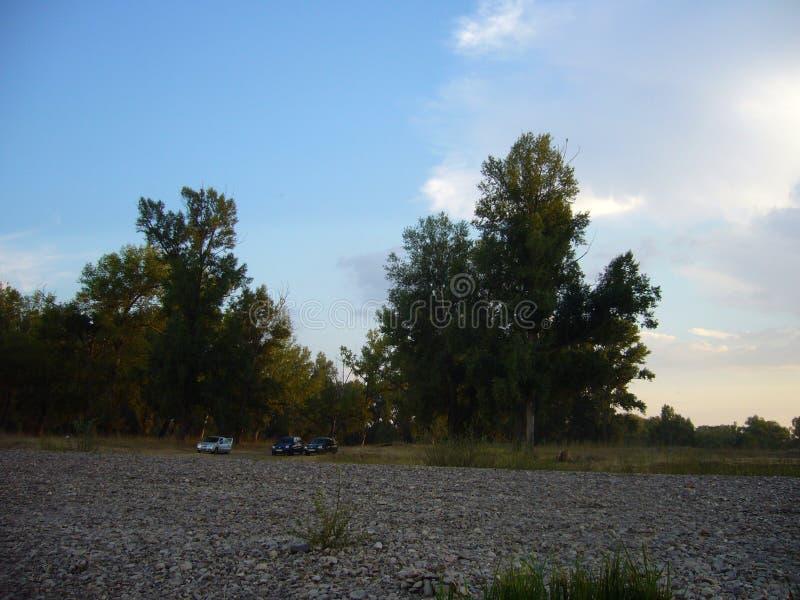 晚上与树的夏天风景在石岸- 1 免版税图库摄影