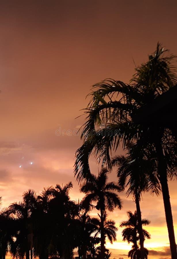 晚上佛罗里达棕榈 库存照片