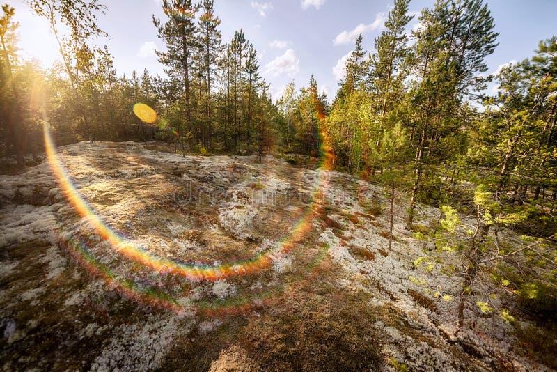 晚上在有阳光和彩虹的夏天森林上色了l 免版税库存图片