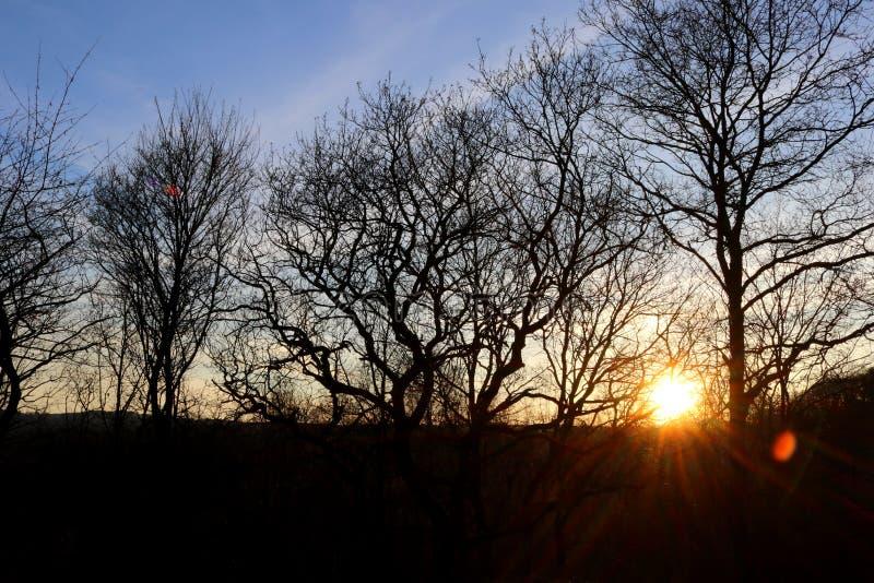 晚上在贫瘠树后的太阳设置 免版税库存图片