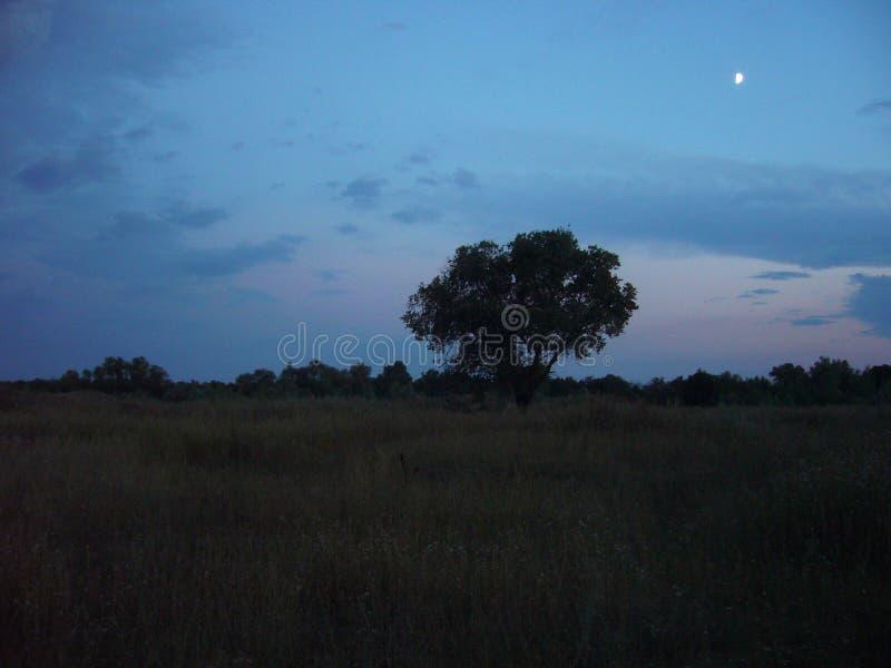 以晚上天空为背景的树 库存图片