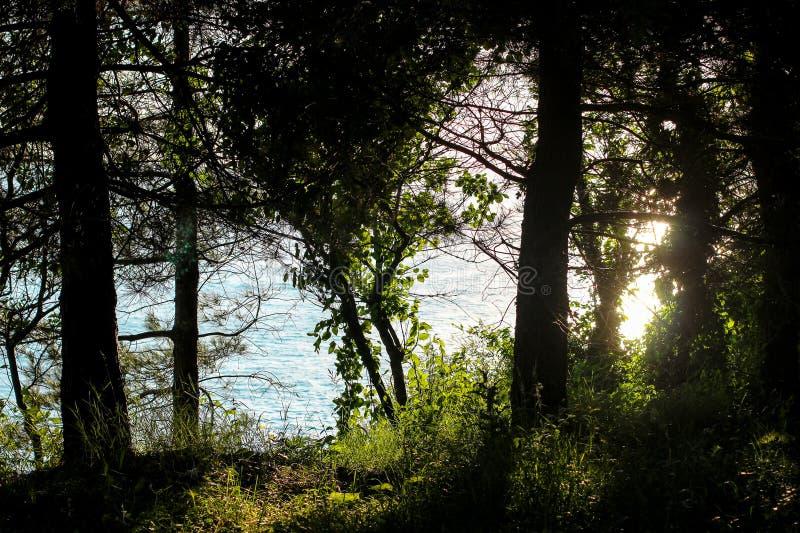 晚上太阳通过树,树发出光线在阳光下,光束通过树,道路在公园 库存照片