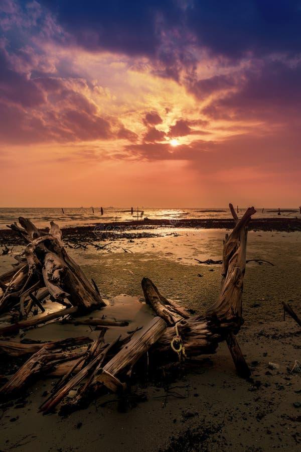 晚上日落,在海滩的美洲红树树干在低潮,pantai kelanang期间 免版税库存图片