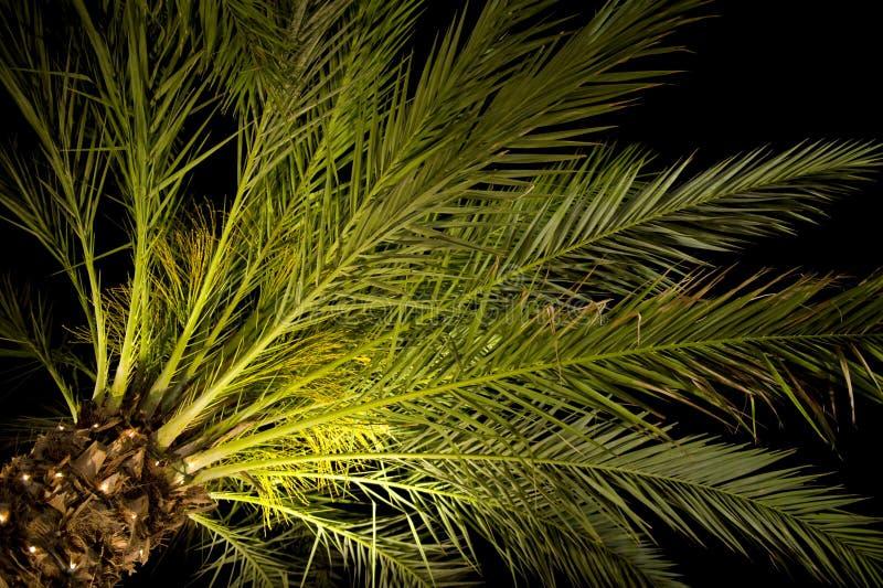 晚上棕榈树 免版税库存照片