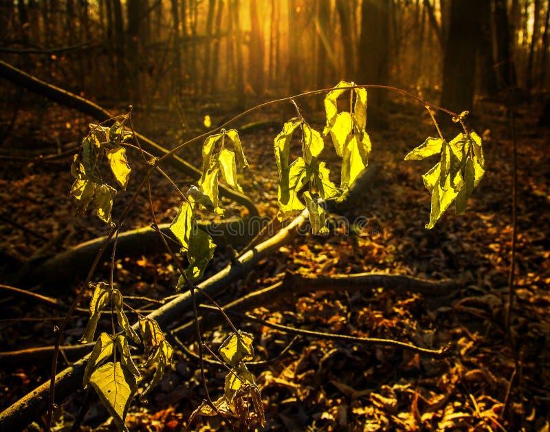 晚秋天在森林里 免版税库存图片