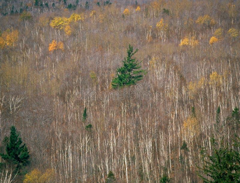 晚秋天在白色山国家森林里,北新罕布什尔 免版税库存照片