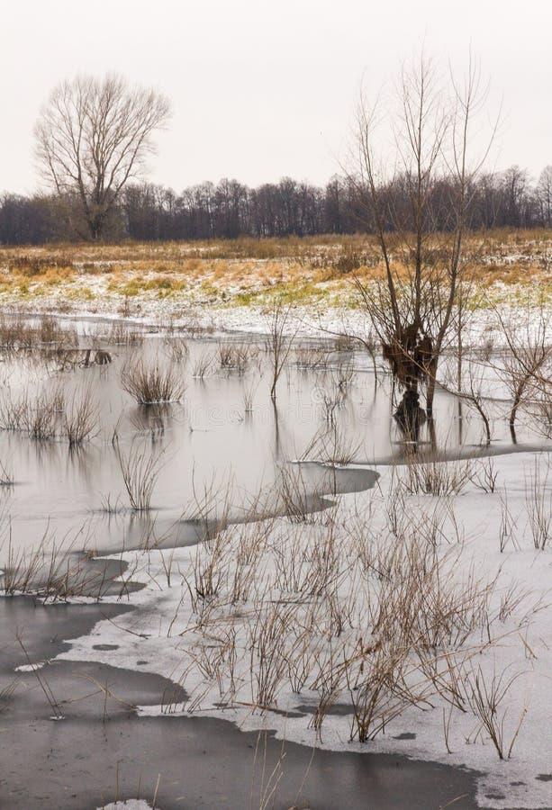 晚秋天 在稀薄的冰下的冻池塘与杨柳丛生生长在它 图库摄影