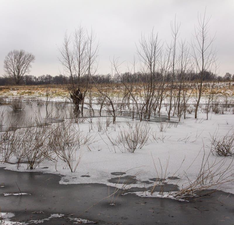 晚秋天 在稀薄的冰下的冻池塘与杨柳丛生生长在它 免版税库存照片