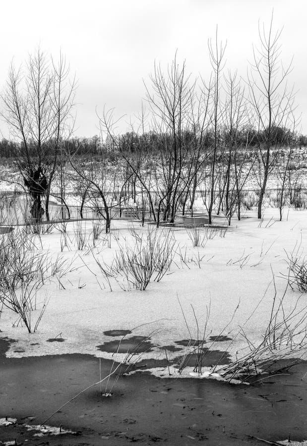 晚秋天 在稀薄的冰下的冻池塘与杨柳丛生生长在它 库存照片