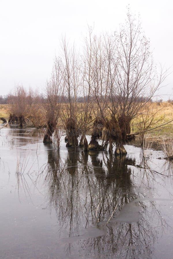 晚秋天 在稀薄的冰下的冻池塘与杨柳灌木 免版税图库摄影