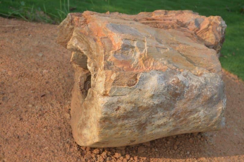 晚第三纪中新世的期间被子植物植物木石化化石在Amkhoi化石公园找到的,birbhum,西孟加拉邦,印度 免版税图库摄影